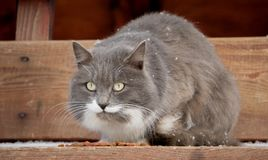 Le chat se repose Images stock