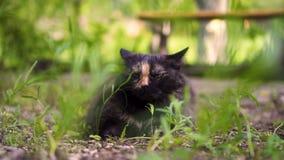 Le chat se repose dans l'herbe verte sur la nature, jour clips vidéos