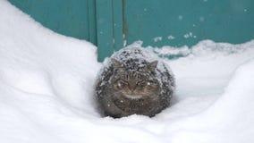 Le chat se repose dans la neige clips vidéos