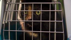 Le chat se repose dans le transporteur, jour banque de vidéos