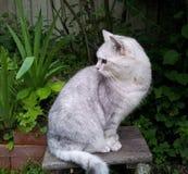 Le chat se repose dans un vieux tabouret dans la cour photographie stock libre de droits