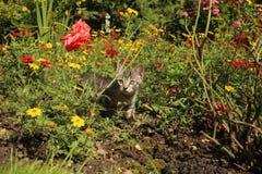 Le chat se repose en fleurs photos stock