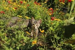 Le chat se repose en fleurs image libre de droits