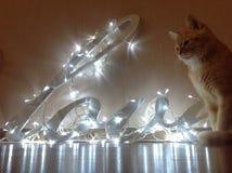 Le chat se repose près de l'amour de mot des guirlandes Images stock