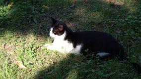 Le chat se repose sur l'herbe banque de vidéos