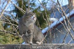 Le chat se repose sur la barrière et les montres étroitement Image libre de droits