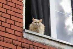 Le chat se repose sur la fenêtre Photo libre de droits
