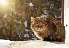 Le chat se repose sur le porche pendant l'hiver images libres de droits