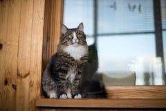 Le chat se repose sur le rebord de fenêtre Chat se reposant sur la fenêtre à la maison dans le jour ensoleillé Chat détendant sur Photographie stock libre de droits