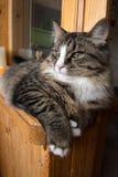 Le chat se repose sur le rebord de fenêtre Chat se reposant sur la fenêtre à la maison dans le jour ensoleillé Chat détendant sur Photos stock