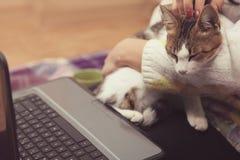 le chat se repose sur le recouvrement du ` s de fille Images stock