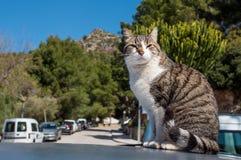 Le chat se repose sur le toit de la voiture Images libres de droits