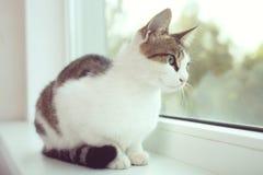 Le chat se repose sur un filon-couche blanc de fenêtre Photo libre de droits