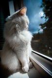 Le chat se reposent par l'hublot Photographie stock