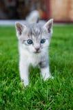 Le chat se tient dans l'herbe Photo libre de droits