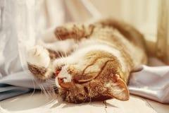 Le chat se trouve et lave les pattes image stock