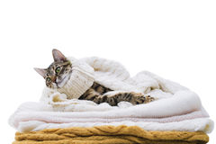 Le chat se trouve sur les vêtements de laine Image stock