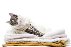 Le chat se trouve sur les vêtements de laine Photos libres de droits