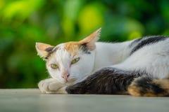 Le chat se trouve sur le plancher à l'arrière-plan vert naturel Images stock