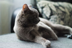 Le chat se trouve sur un sofa Images libres de droits
