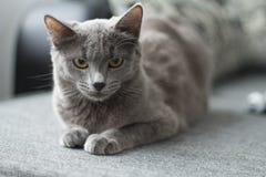 Le chat se trouve sur un sofa Image libre de droits