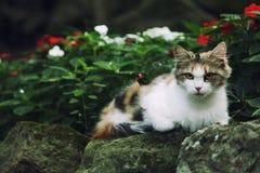 Le chat se trouve sur une pierre Images stock