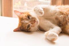 Le chat semble en avant et semble mignon Photo libre de droits