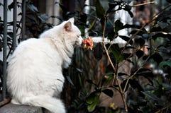 Le chat sent la fleur Image stock