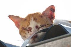Le chat soit blessé Photos stock