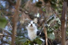Le chat sur l'arbre Photographie stock