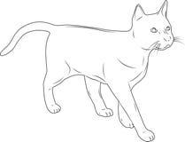 Le chat sur un fond blanc Images libres de droits