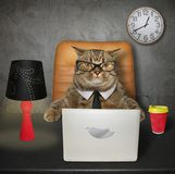 Le chat travaille à la table photos stock