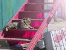 Le chat velu se trouve sur les escaliers Photographie stock