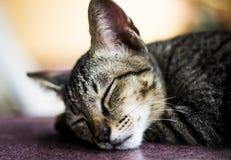 Le chat a voulu dormir Photo libre de droits