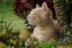 Le chaton Photographie stock