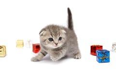 Le chaton Photo libre de droits