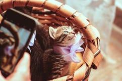Le chaton avec un arc se repose dans un panier et il est photographié sur Image stock