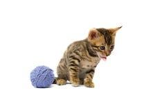 le chaton a collé son fil d'embrouillement de langue images libres de droits