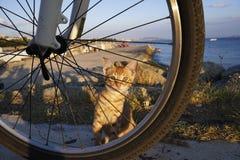 Le chaton de gingembre se cache image libre de droits