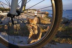Le chaton de gingembre se cache photo libre de droits