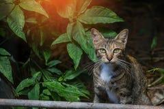 Le chaton de montre de chat de mère jouait autour Images libres de droits