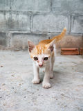 Le chaton de rue Images stock