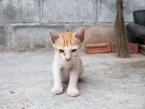Le chaton de rue Photo libre de droits