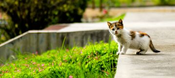 Le chaton devant l'appareil-photo images stock