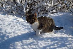 Le chaton devient d'abord au courant de la neige Photo stock