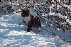 Le chaton devient d'abord au courant de la neige Image stock