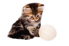 Le chaton drôle joue avec la boule du fil sur le blanc Images stock