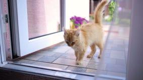 Le chaton entre dans la salle du jardin banque de vidéos