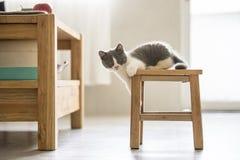 Le chaton gris mignon Photographie stock