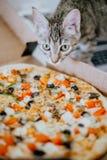 Le chaton haut ?troit renifle la pizza photographie stock libre de droits